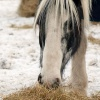 Geriatric Horse Package – Special Offer