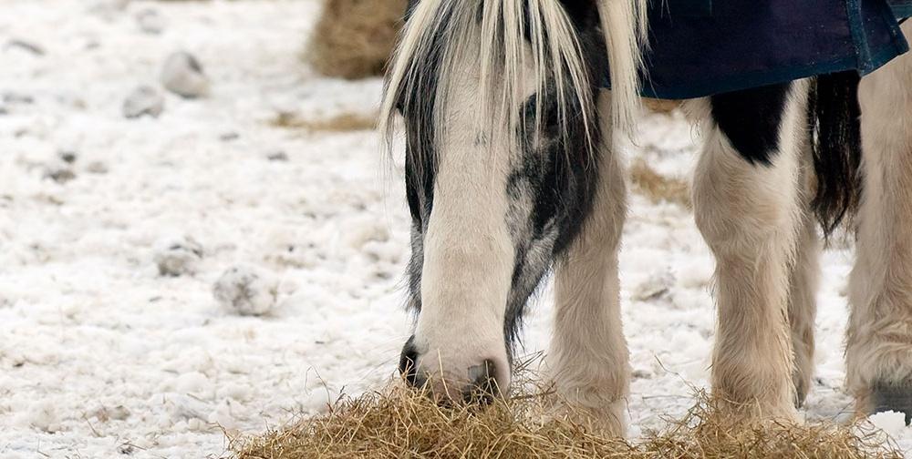 Equine winter health talks